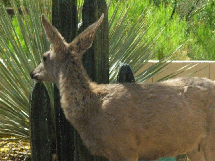 2014-04-27 Deer 005