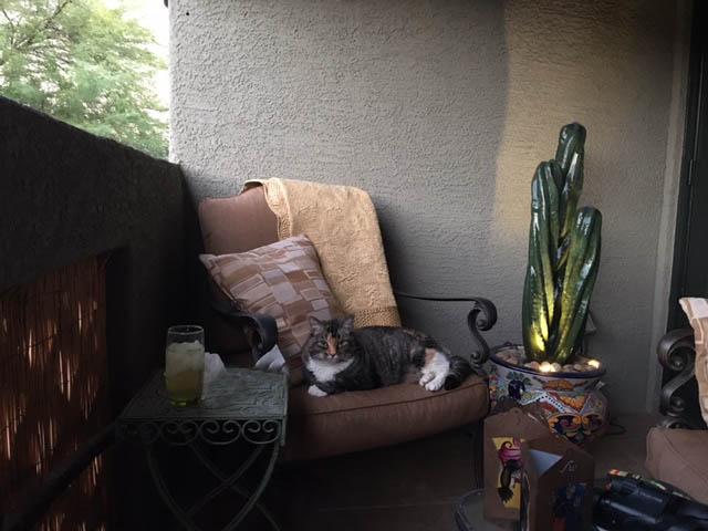 3 arm kitty